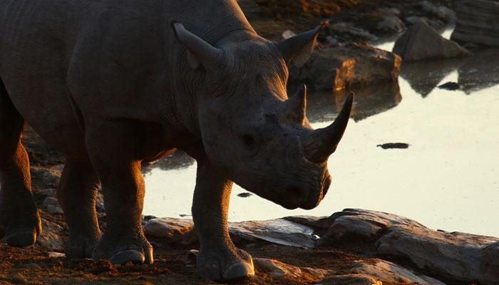black rhino standing next to water