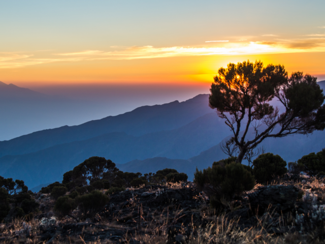 shrubs and bushes on a mountain with the sunrise in the background